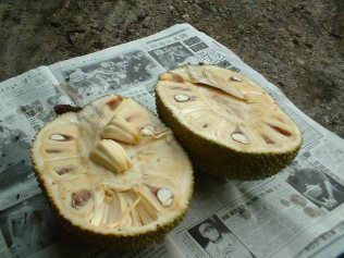 Jack_Fruit_Opened