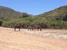 Donkey's Island